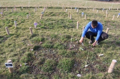 Working on the plots - PaNDiv